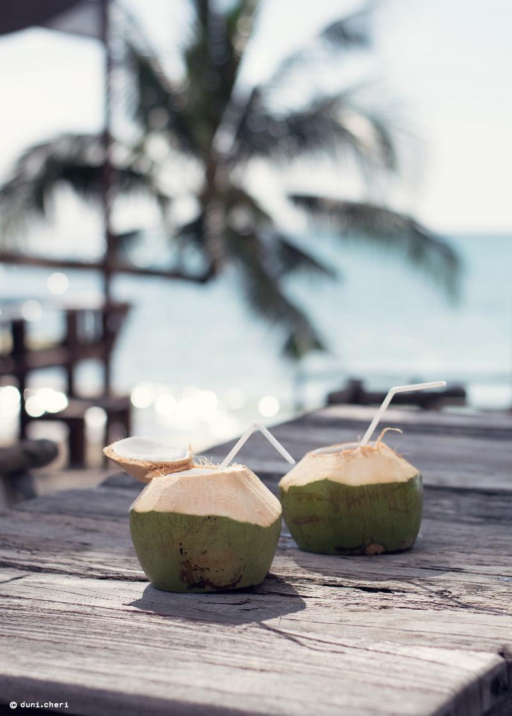 frische kokosnuss thailand meer palmen