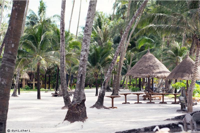 palmen thailand strand insel koh kood