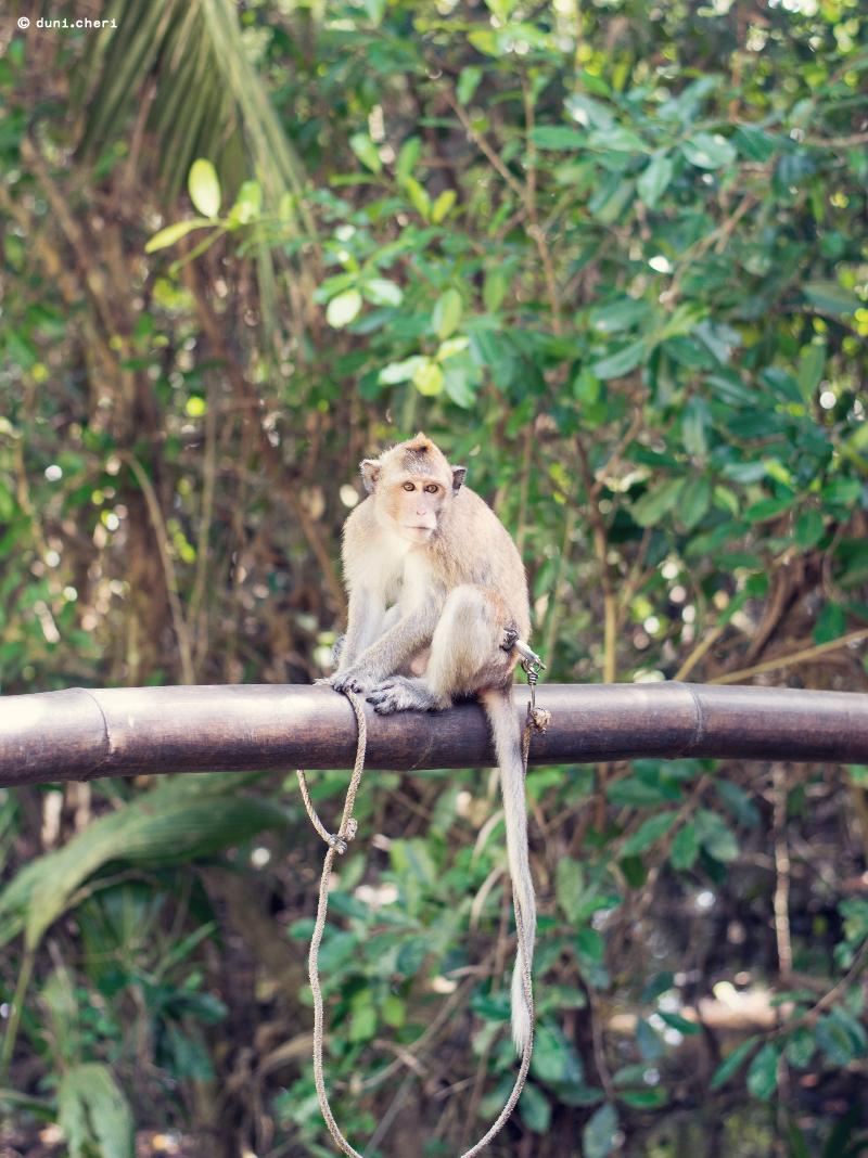 Thailand Baby Äffchen Affe