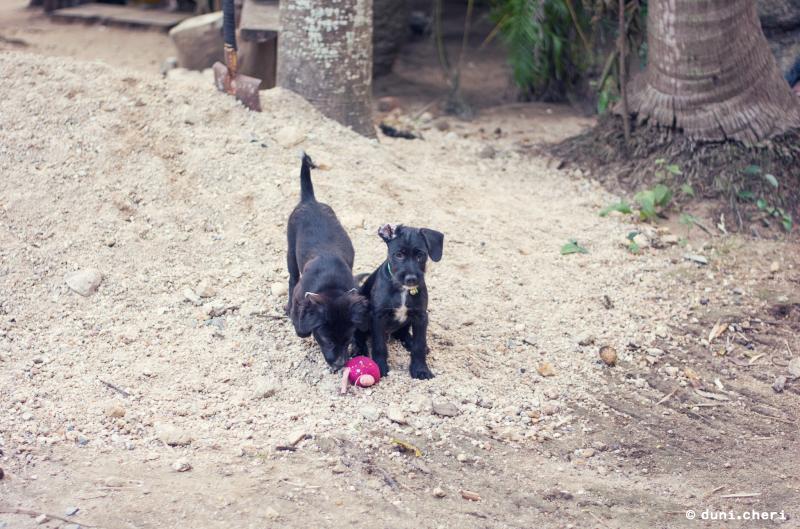 thailand hunde welpen schwarz