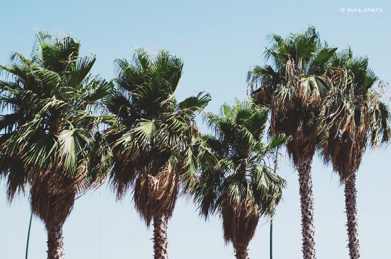 neapel reise tipps palmen