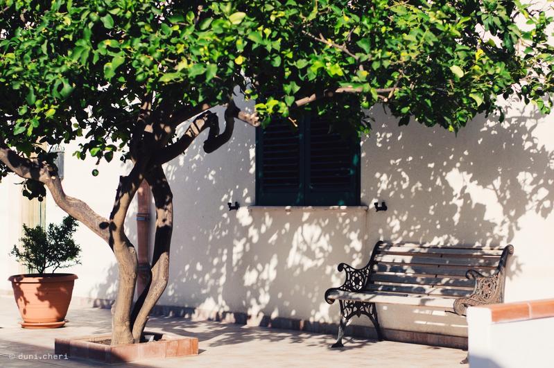 limettenbaum sizilien urlaub