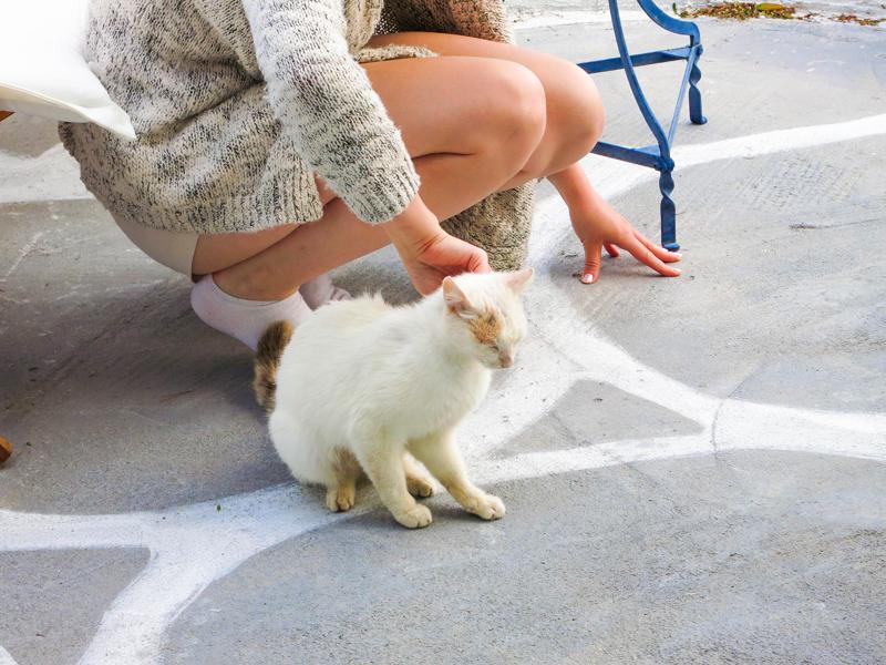 Süße weiße Katze in Griechenland
