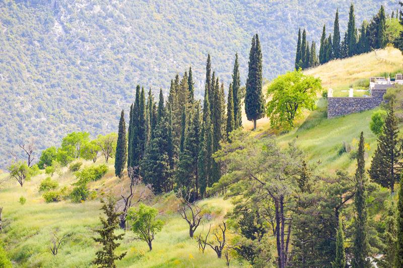 Griechenland Landschaft spitze Bäume