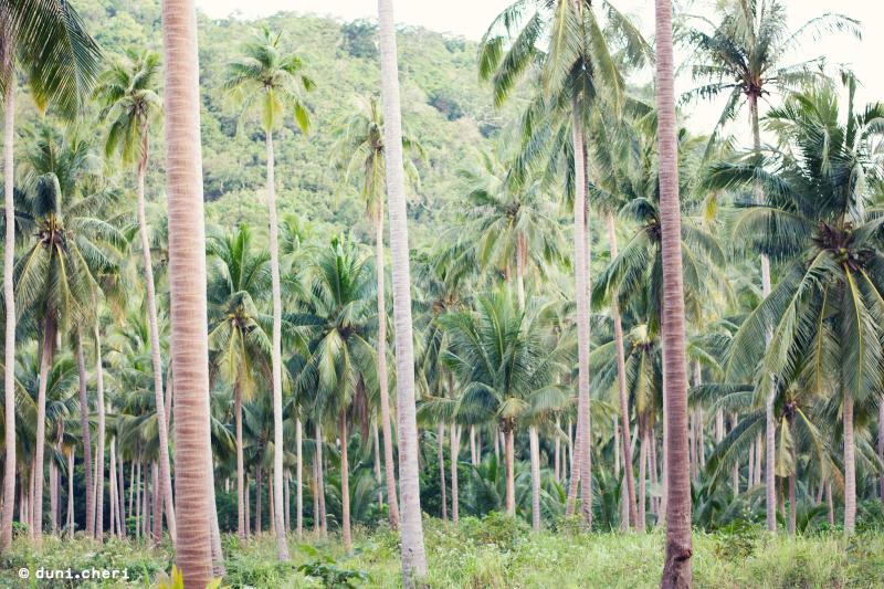 palmen dschungel thailand insel