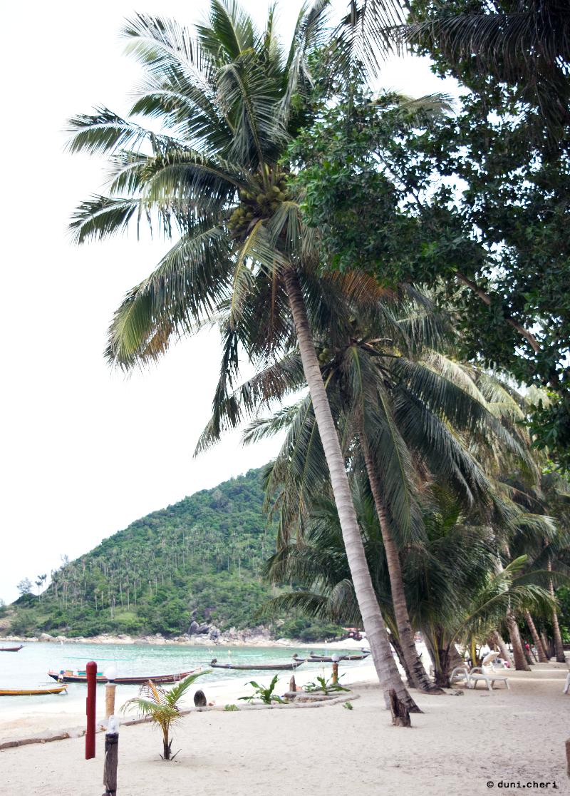 palmen strand koh phangan thailand