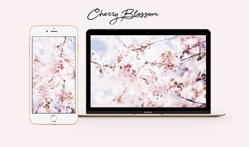 cherry blossom kirschblüten wallpaper iphone mac