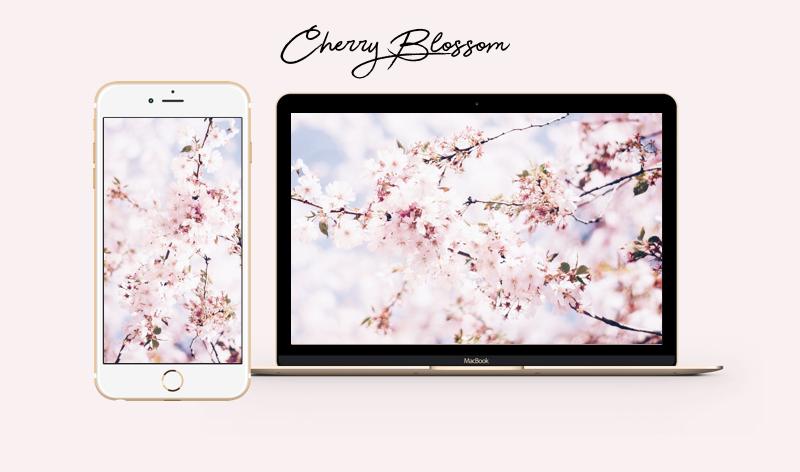 cherry blossom kirschblüten wallpaper iphone mac