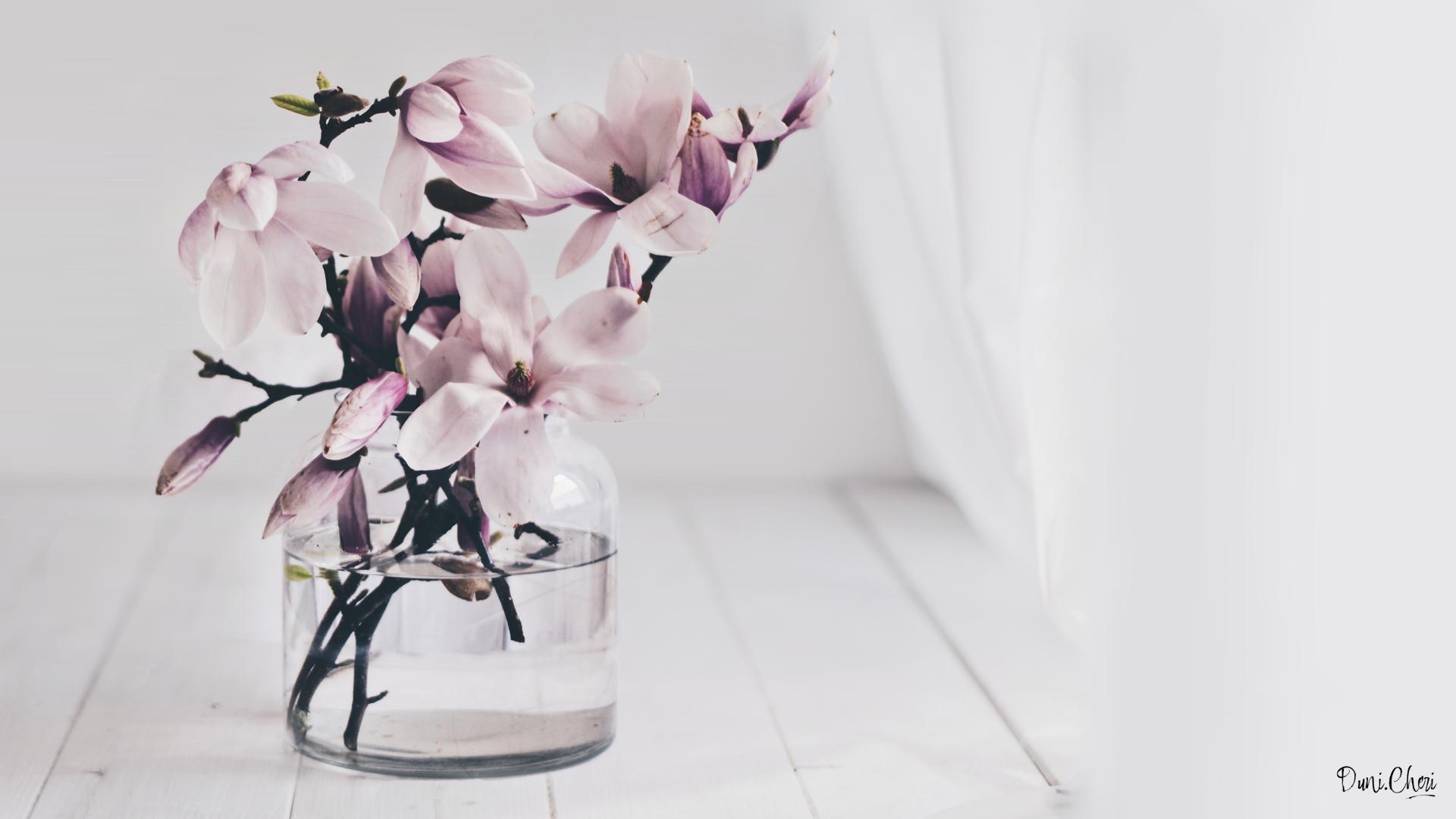 magnolia wallpaper desktop