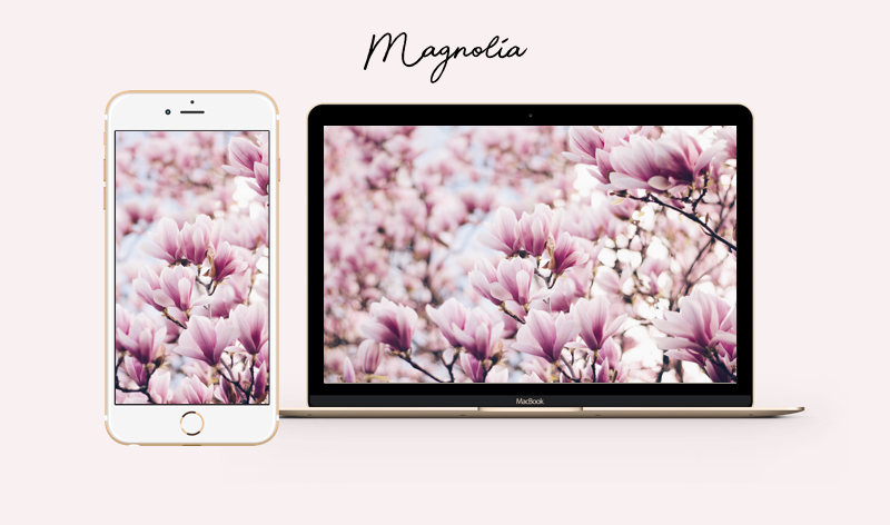 magnolia wallpaper iphone mac