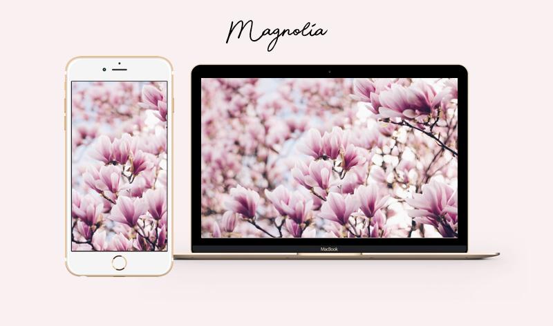 magnolia wallpaper iphone mac