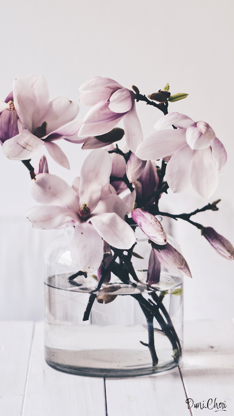 magnolia wallpaper mobile
