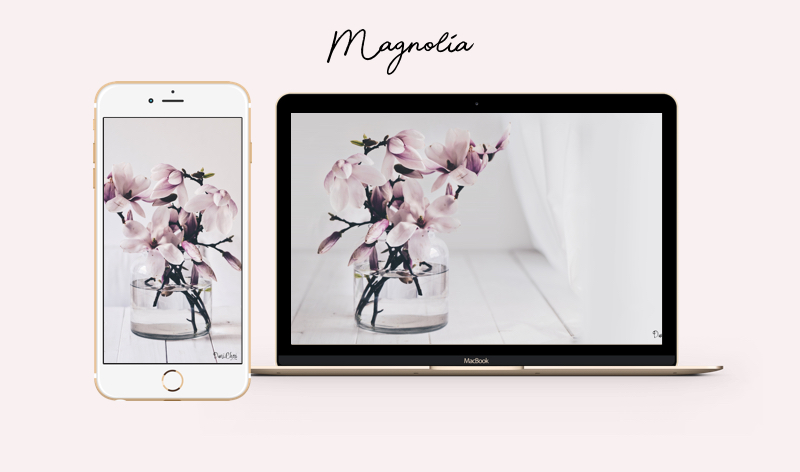 magnolie wallpaper iphone mac