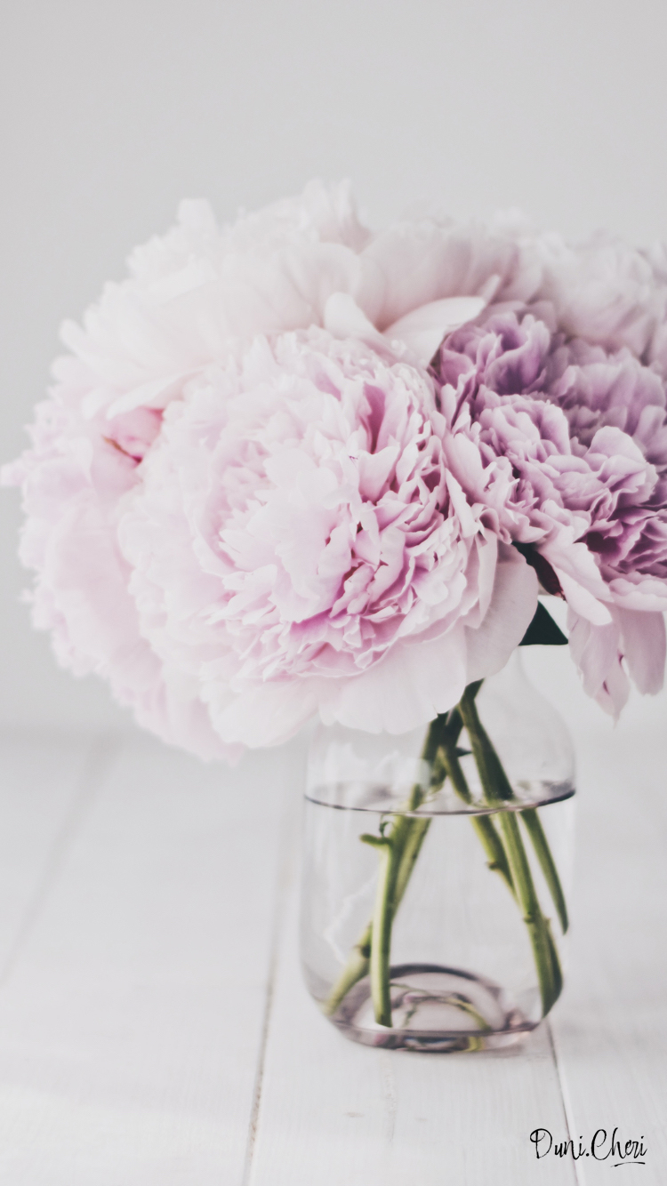 flower wallpaper peonies pfingstrosen wallpaper rosa mobile