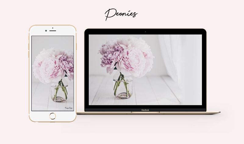 flower wallpaper peonies pfingstrosen rosa wallpaper iphone-mac