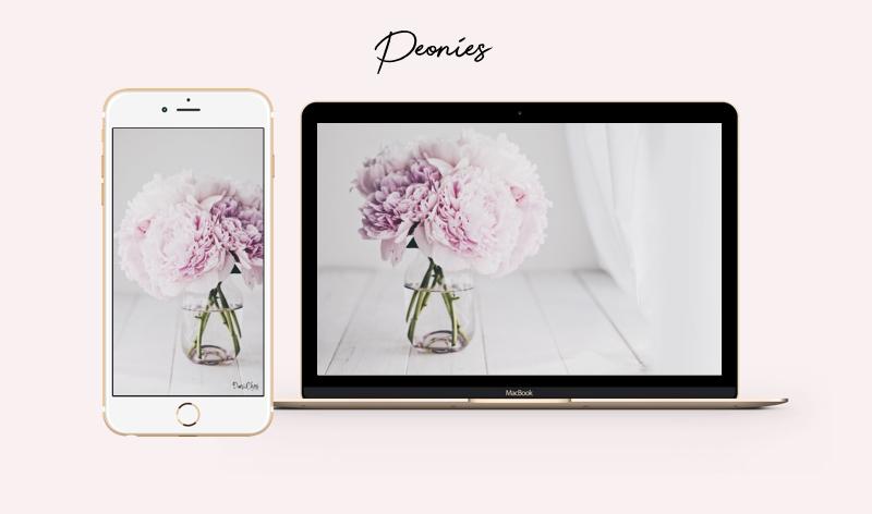 peonies pfingstrosen rosa wallpaper iphone-mac