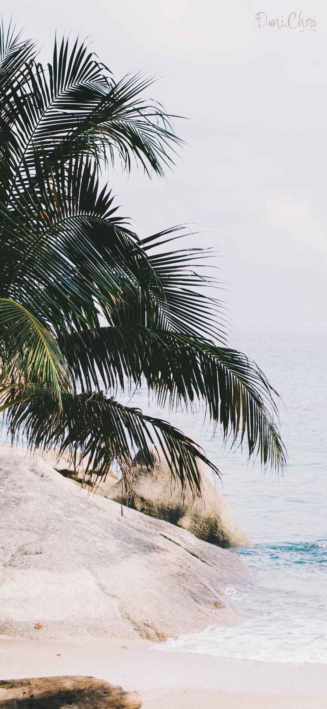 palme strand summer wallpaper iphone x 21   duni.cheri