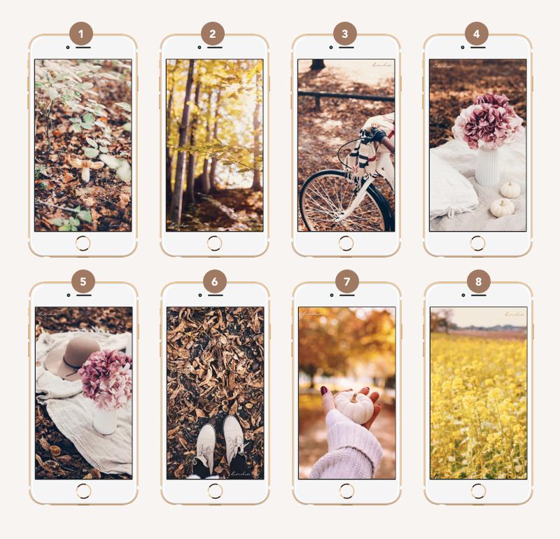 free autumn wallpaper herbst hintergrund