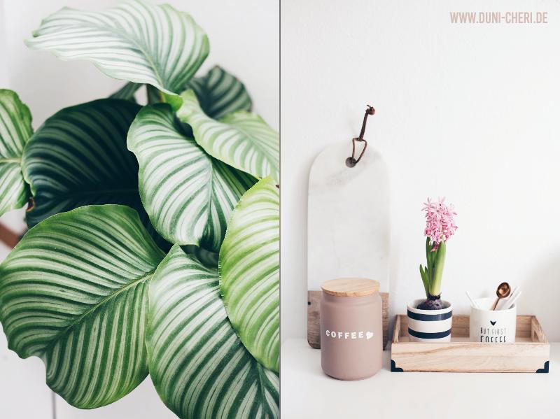 calathea pflanze kaffee deko