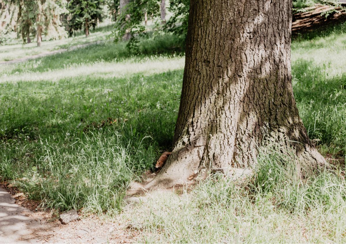eichhörnchen park