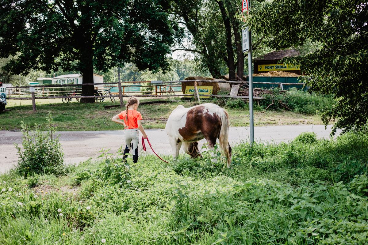 reise prag pferde