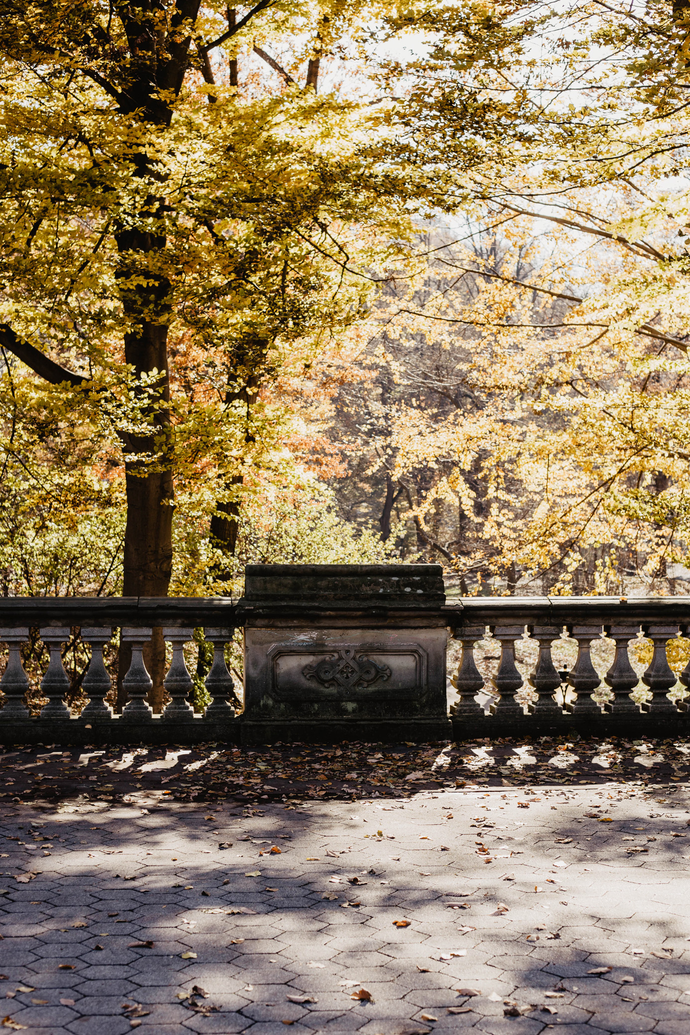 central park herbst sonne