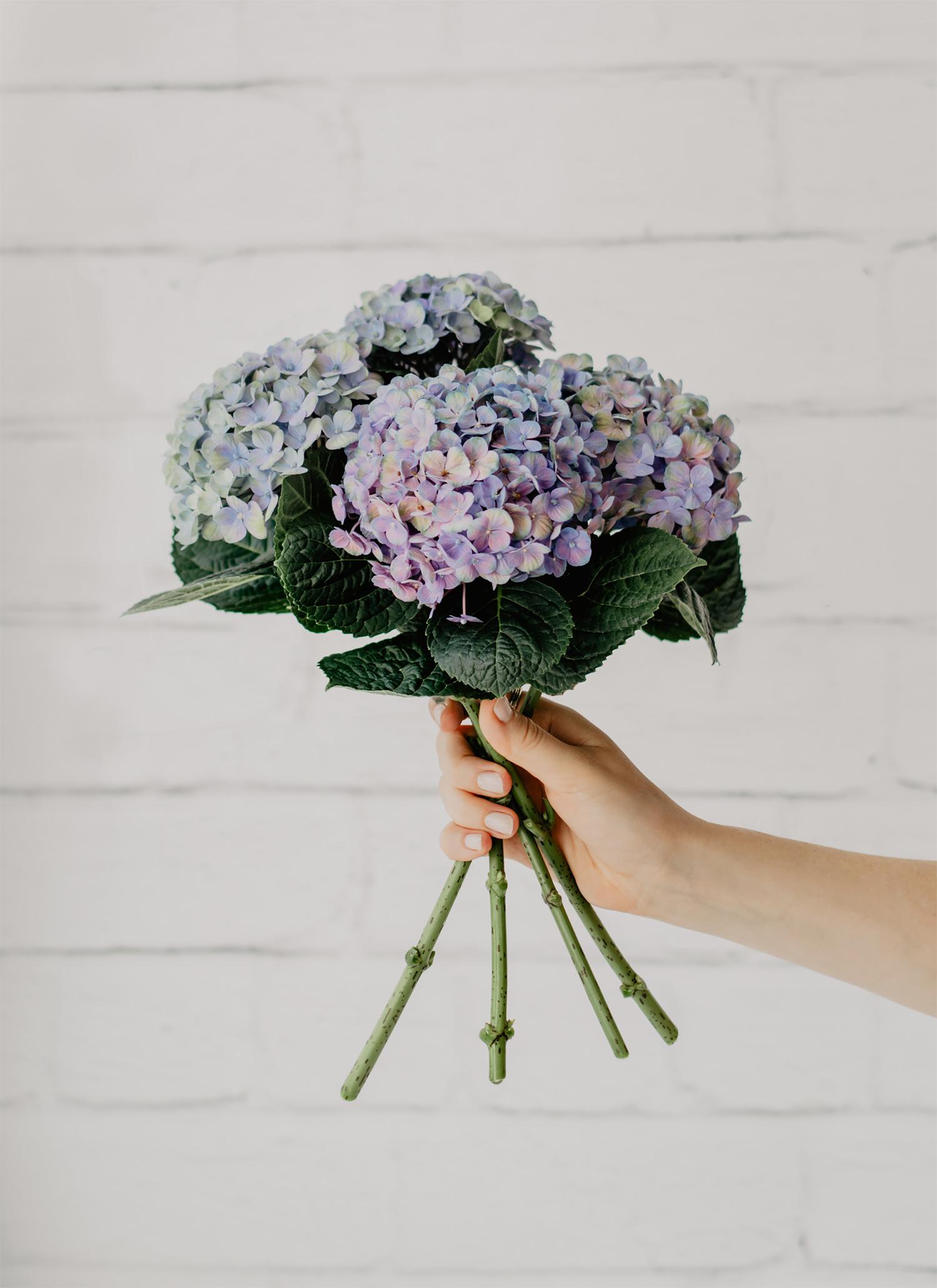 hortensien strauss blau lila